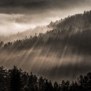 Patrik Minár - Awaking forest