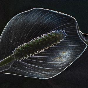 Kvet 2