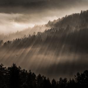 Patrik Minár - Awaking forest (2016 / December)